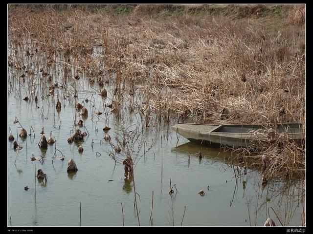 乡下采风掠影(摄影组图) - 深秋 - 深秋的故事的博客