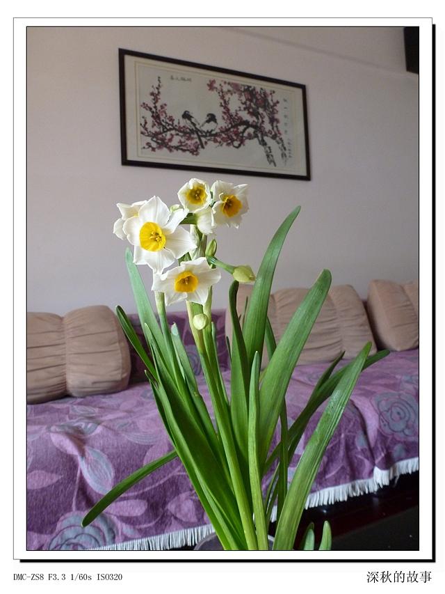 秀秀咱家的水仙花(摄影组图) - 深秋 - 深秋的故事的博客