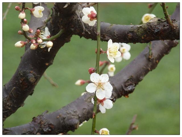 春啊,请不要把我们遗忘(诗歌) - 深秋 - 深秋的故事的博客