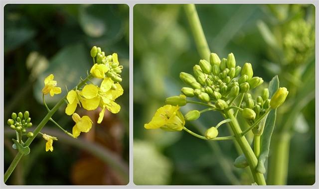 校园里春天的花(原创摄影) - 深秋 - 深秋的故事的博客