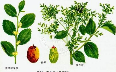 一行手绘 植物表现
