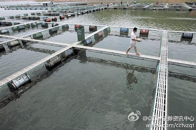 中国四大渔场(渤海渔场,舟山渔场,南海沿岸渔场和北部湾渔场)已名不副