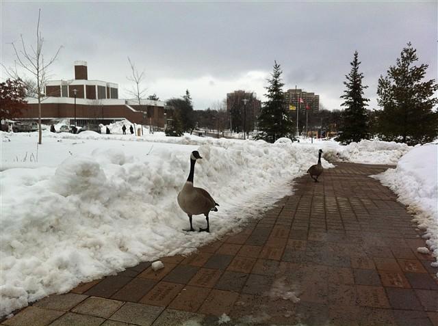 加拿大,我来啦!——加拿大之行(一) - 深秋 - 深秋的故事的博客